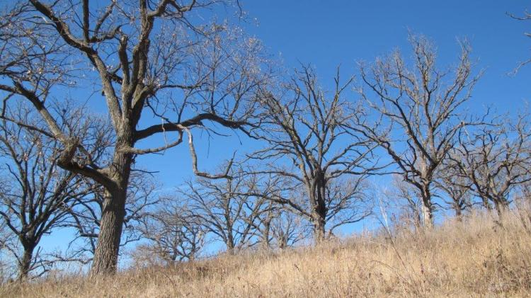 Loess Hills in winter. Photo by Robert Smith