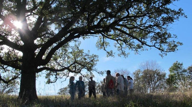 New Tree School in the Loess Hills