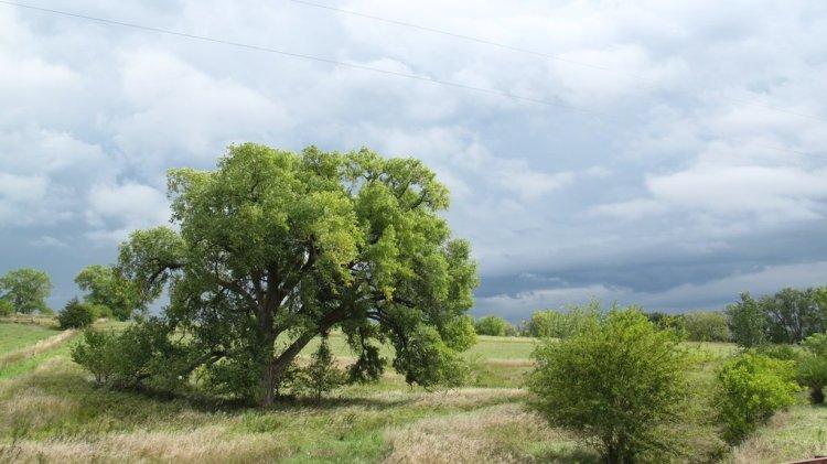 cottonwood Saunders County