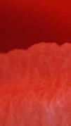 scarlet-2