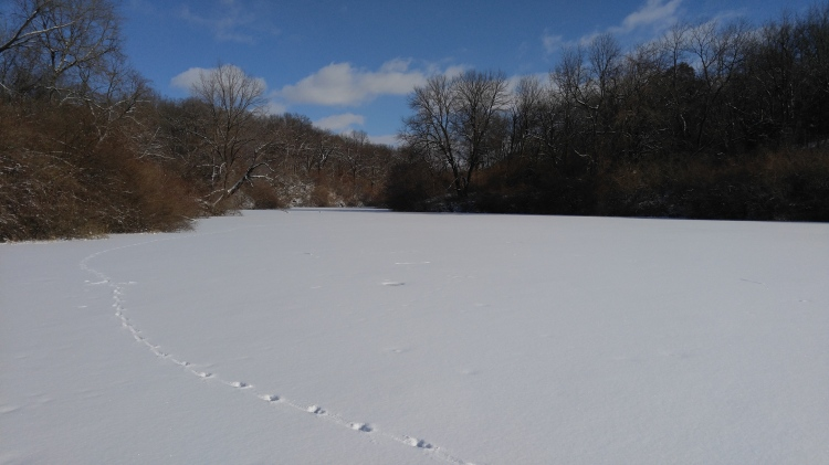 coyote-lines-on-snow