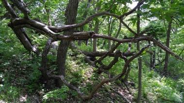wspwoods