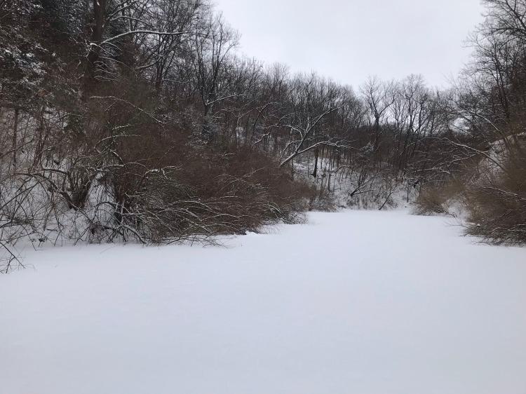 pond in winter, Genevieve