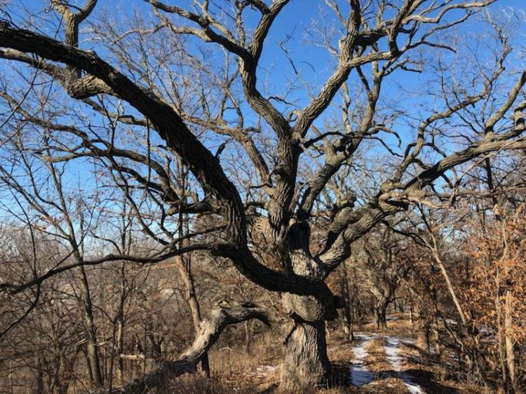 oakwoodstroysoderberg